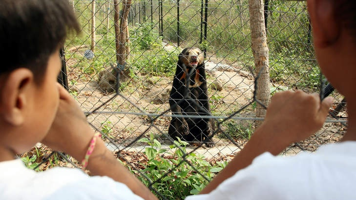 Assisted Development: Land of splendour: Bears at Phnom Tamao Wildlife Rescue Centre.