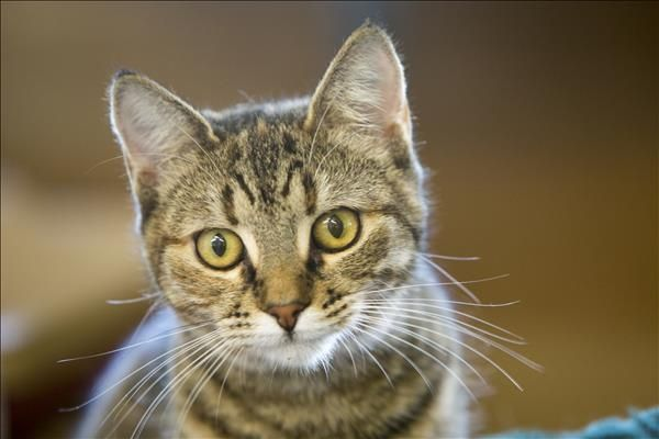 Piper is a gorgeous kitty from Noosa who has a lot of love to give. She's looking for a brand new start and someone to show her that life isn't that scary. Come meet her today! http://bit.ly/2rWlhgx