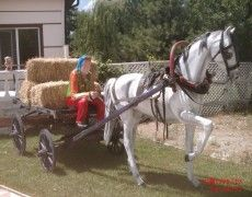 Kır At Arabası Konsept 3 Parça