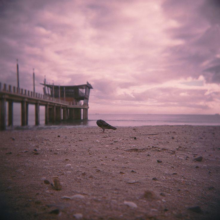 #beach, #clouds, #durban #beachfront, #Moyo, #Pier, #pigeon, #sand, #ushaka