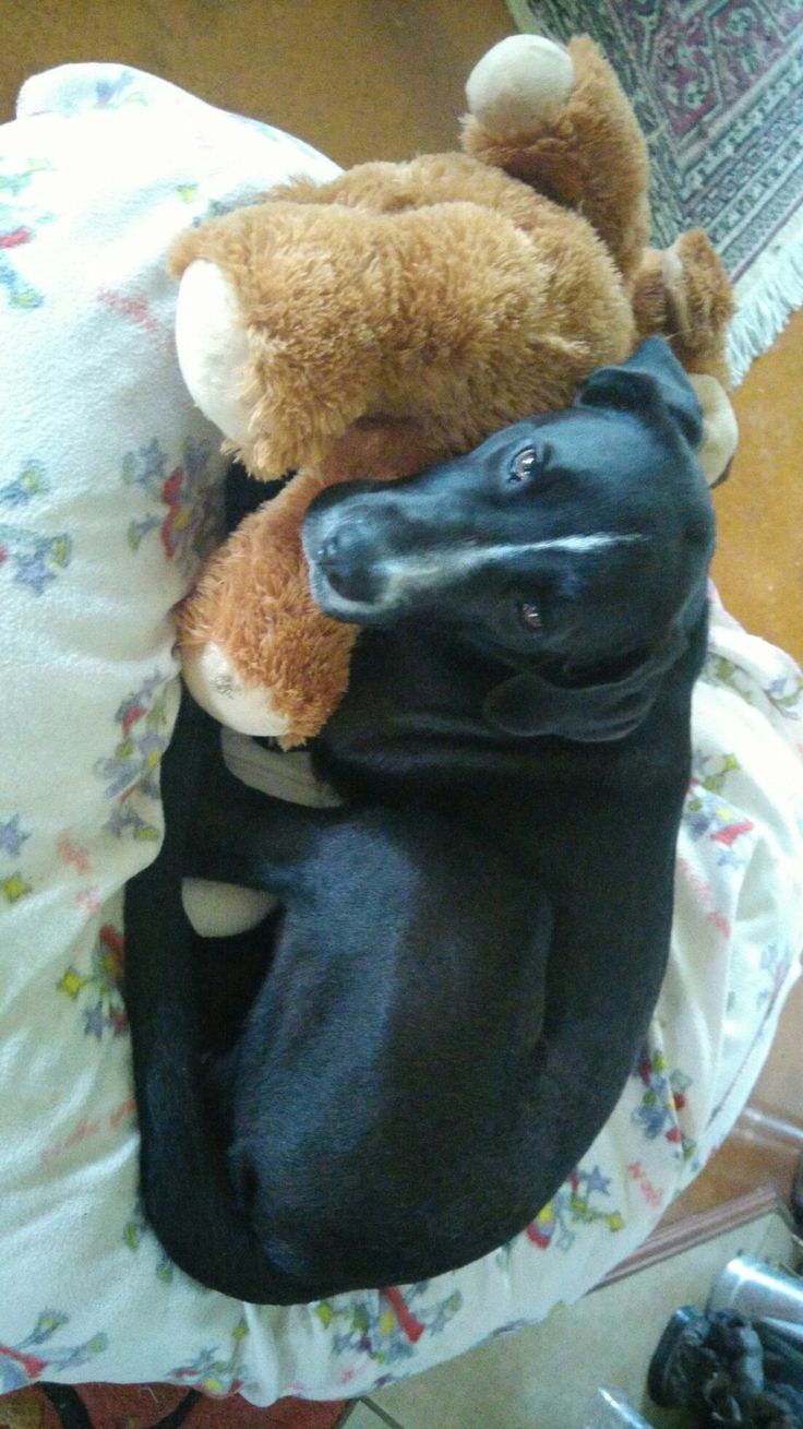 28th June.  His new teddy he got for his 6 month birthday.