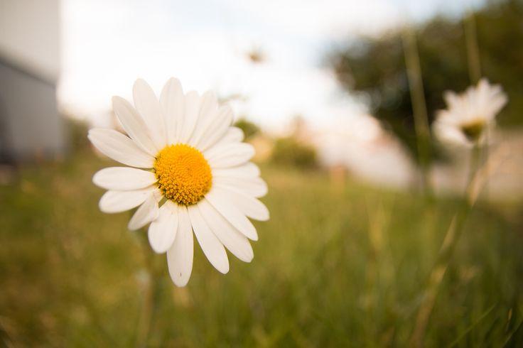 Everybody loves flowers by Ernst Erdmann on 500px