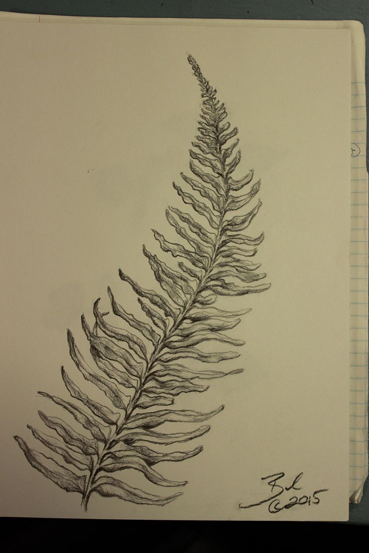 Fern - Graphite on Drawing Paper | Joshua Beal's Fine Art | Pinterest ...
