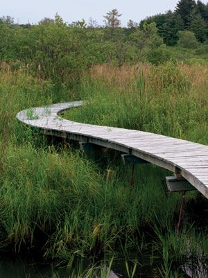 When we think of paths through nature, we may first think of somewhat muddy trails carved out willy-nilly through the trees, covered in leaves. But a few landscape architects and architects have been showing how paths can be designed, set-apart, yet also enhance the experience of being surrounded by nature while carefully protecting natural habitat.