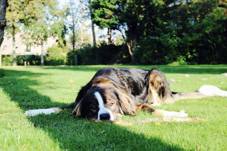 boring ...? #koningbinc #dog #dogs #dogmodel #lovemydog
