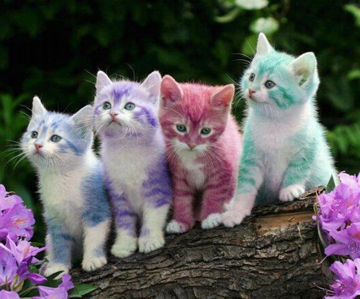 Pastel Kittens Yes I Know It Is Photoshopped But I Like