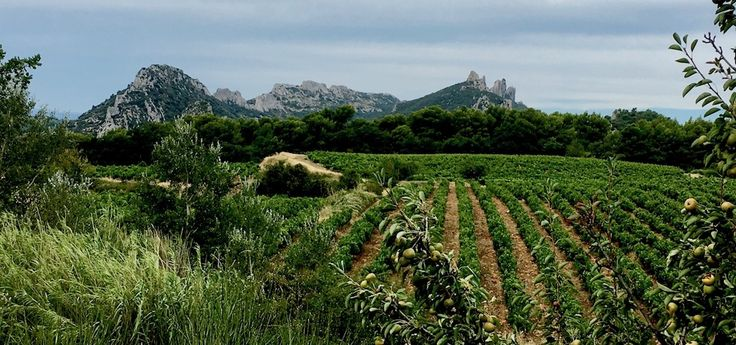 Discovering Beaume de Venise Muscat Wine of Provence - Learn French