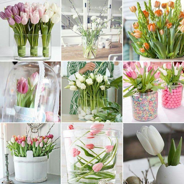 Tulpen ❤