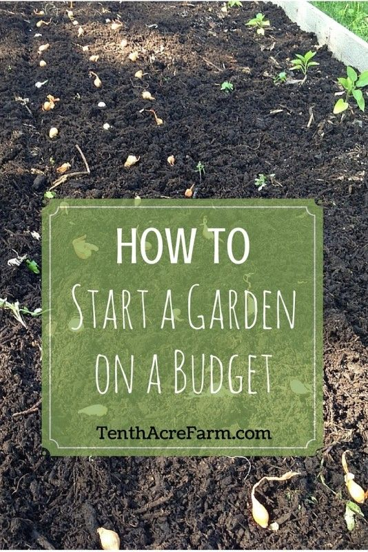 How to Start a Garden on a Budget: Gardening can seem overwhelming when you consider all of the materials you need to get started. Seeds, fencing, soil, tools, and more can add up--even on a generous budget. So what's a beginning gardener to do? Here are six ideas for getting started without breaking the bank.