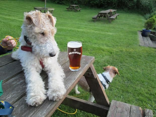 Dog-friendly pubs in the Cotswolds