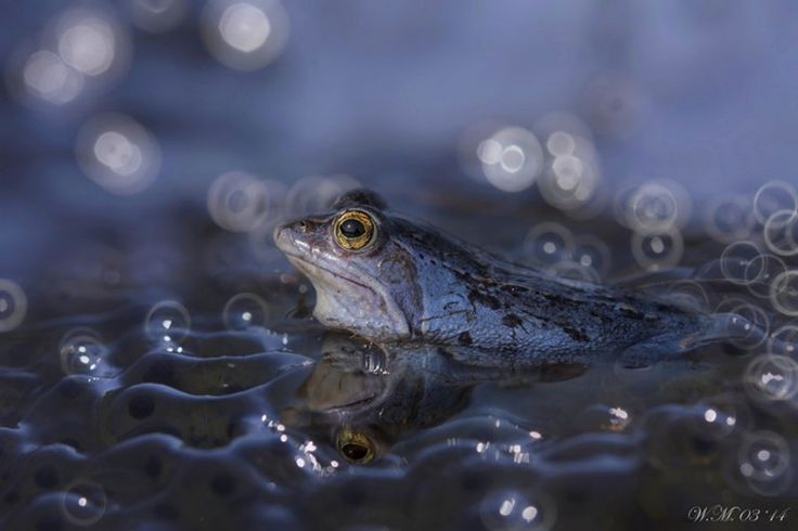 Small world around us – Beautiful miniature world of frogs in macro photography | Vuing.com