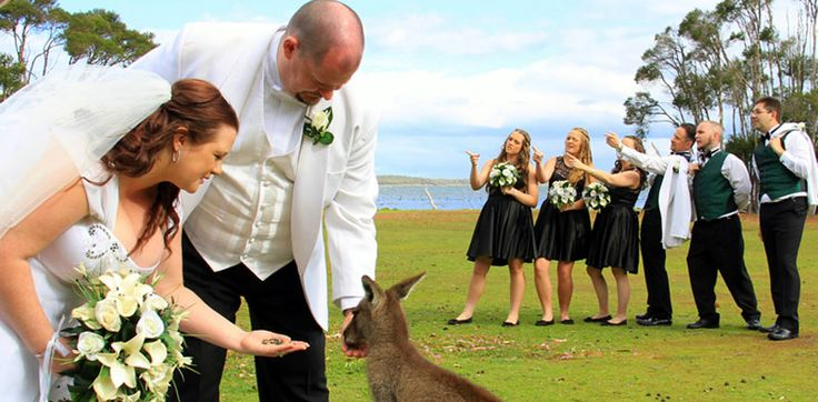 One of the many unique benefits of tying the knot at Waterfront Retreat At Wattle Point.  #uniquewedding #australia #InspiredbyGippsland