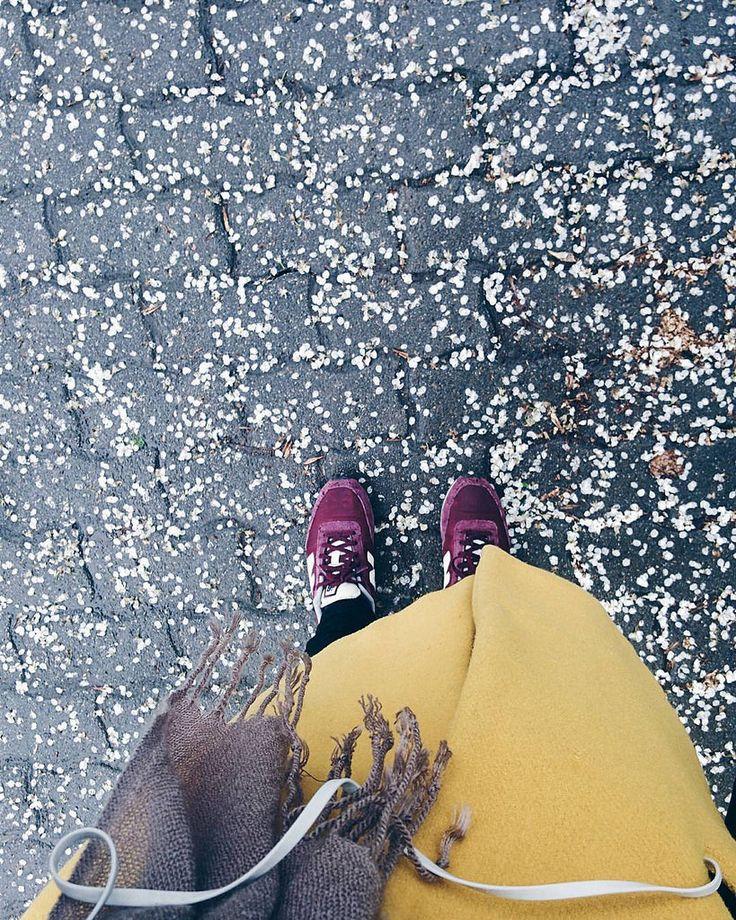 https://flic.kr/p/FBTcMt | Spring,  what's going on?  ️  #timisoara #ig_timisoara #visittimisoara #spring #springishere #rain #rainyday #dayslikethese #citystreets #streetsfromromania #visitromania #ig_romania #romania #explore #exploretimisoara #explorethecity #vsco #vsconew #vsco