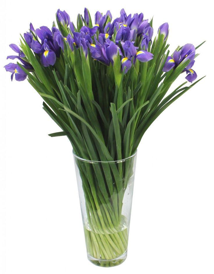 ИРИСЫ СИНИЕ | PRO Цветы — Интернет магазин цветов