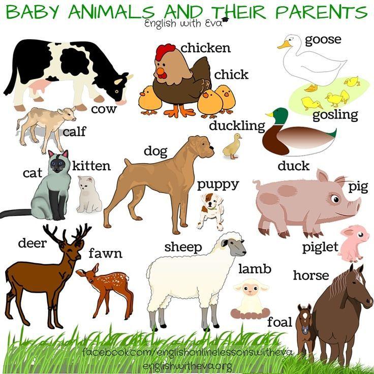 Resultado de imagen para baby animals names Aprender