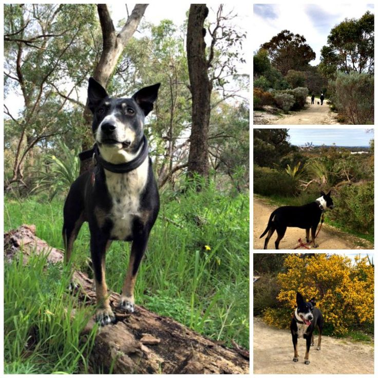 Dog friendly walking trails near Pert