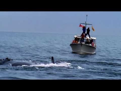 Des baleines et des îles   Prenez la route de l'aventure au parfum de brise marine en suivant l'extraordinaire littoral de la baie de Fundy. Partez à la rencontre des gentils géants de la baie et profitez d'une myriade d'activités et d'expériences uniques sur la route des vacances au Nouveau-Brunswick.