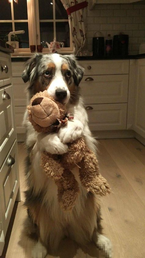 This is my bear. (Source: http://ift.tt/2j2owmd)