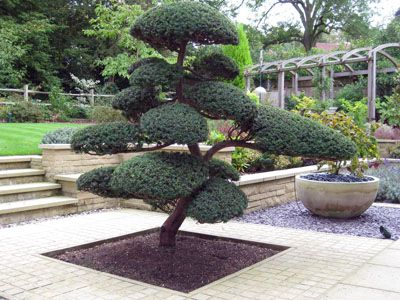 43 best images about niwaki on pinterest oriental for Bonsai de jardin