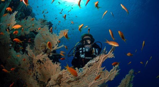 Soma Bay Ressort - Ägypten. Tauchen vor der Haustüre  http://kurier.at/lebensart/reise/aegypten-rifftauchen-in-soma-bay/1.603.763