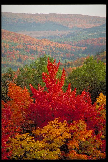Fall in New Brunswick, Canada / L'automne au Nouveau-Brunswick, Canada | Flickr - Photo Sharing!
