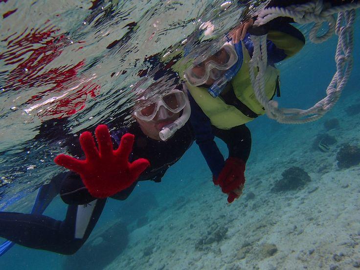 サンゴ礁シュノーケル! - http://www.natural-blue.net/blog/info_203.html