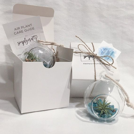 bulk mini terrarium orb air plant terrarium company gift wedding party favor bridal shower favor bulk gift baby shower favor