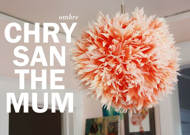 Friday Flowers: Ombre Chrysanthemums