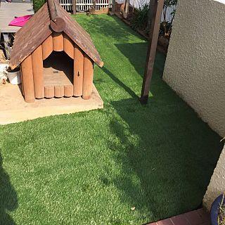 人工芝生をひいてみたのインテリア実例 | RoomClip (ルームクリップ) Entrance/庭/DIY/実家/人工芝生をひいてみたに関連