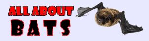 The ALL ABOUT BATS site has a ton of BAT article topics: Bat Houses, Bat Facts, Types of Bats like Vampire, Fruit, and Brown, more!