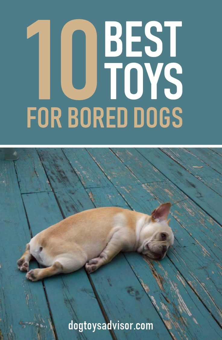 Bored Dog Keep Your Dog Busy While At Work With One Of These