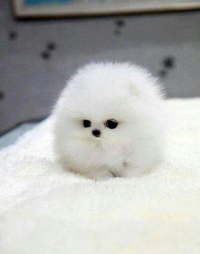 li'l white ball of fluff!! :) <3