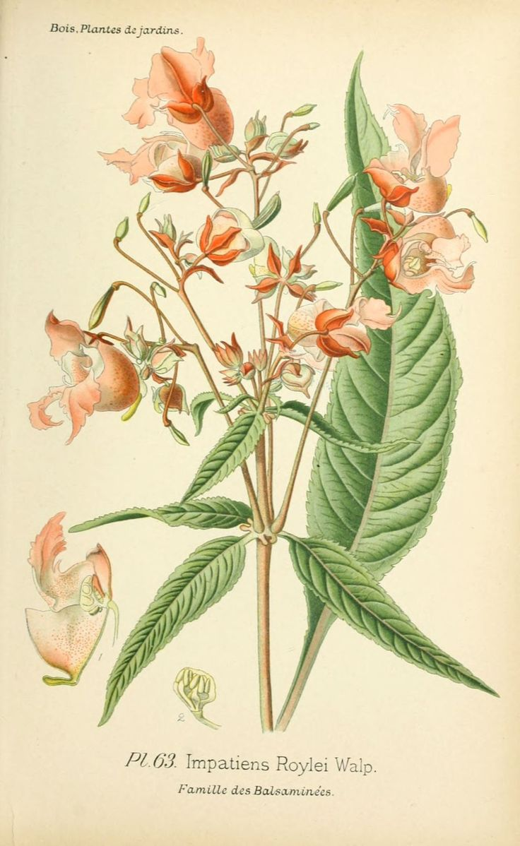 1757 best images about photographs and wall art on pinterest for Botanic fleurs artificielles