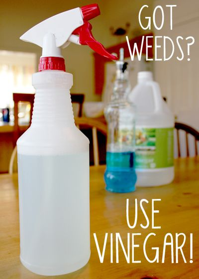 killing weeds with vinegar.  HERBICIDE! cheap, undiluted, store-brand white vinegar that you buy at the grocery store for less than $3 a gallon is a POWERFUL all-natural herbicide. (So be careful not to accidentally splash it on plants you want to keep around!) with a teaspoon of dish soap it works even better!