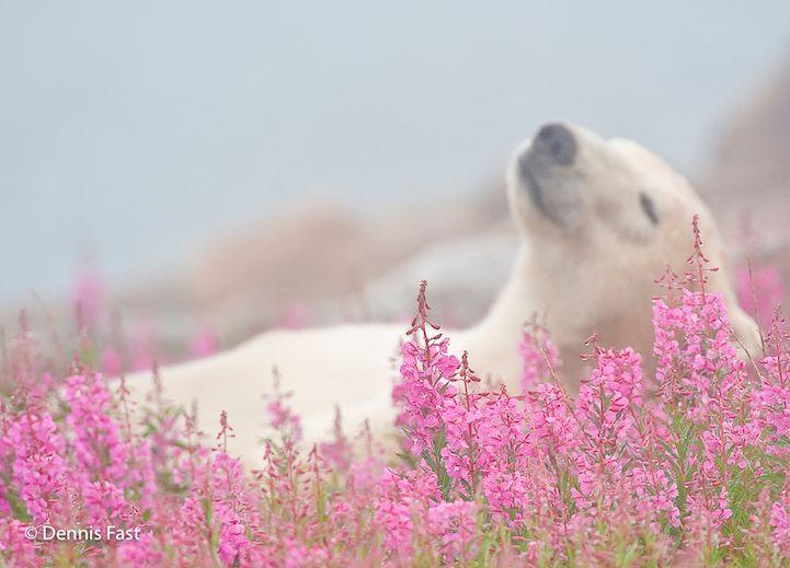 1000 idees sur le theme bebe ours polaires sur pinterest With affiche chambre bébé avec tapis de fakir champ de fleurs