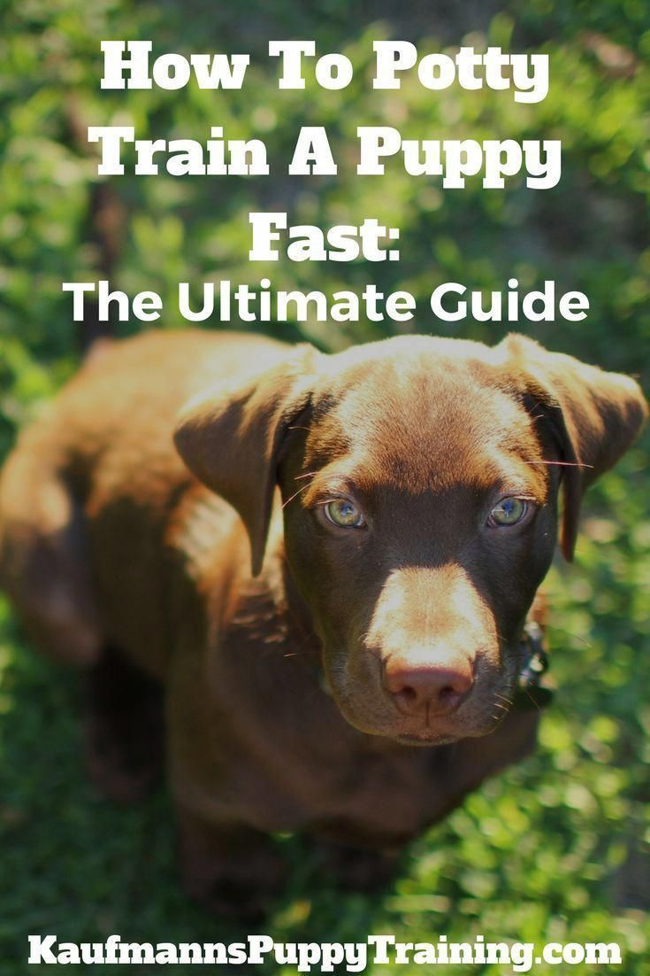 How To Potty Train A Puppy Fast The Ultimate Guide How To Potty