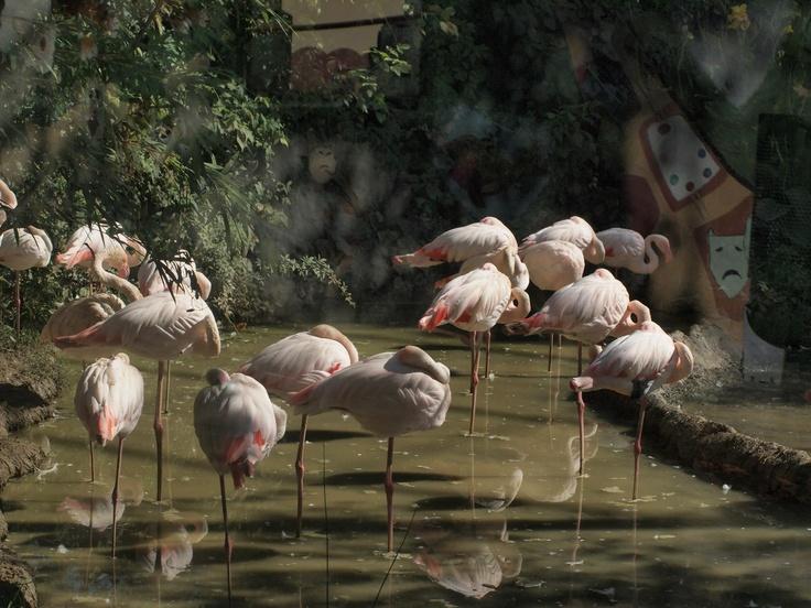 Darıca Zoo