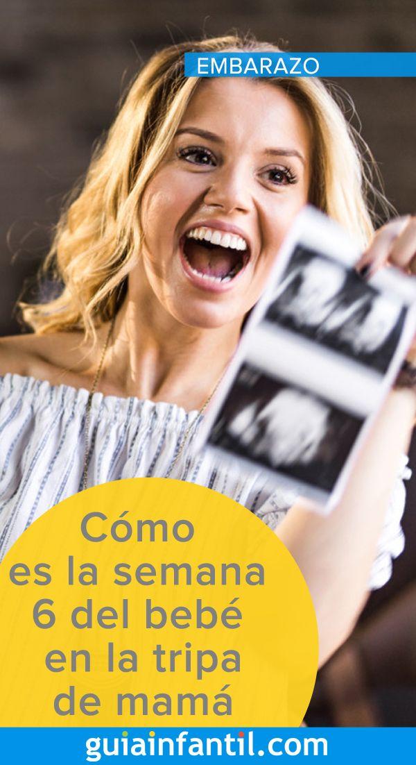 Cómo Es La Semana 6 Del Bebé En La Tripa De Mamá Semana 6 De Embarazo Embarazo 6 Semanas De Embarazo