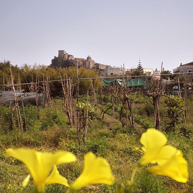 Ascoltate...ma in silenzio...a Ischia sta arrivando la primavera...non fate rumore, altrimenti...    Thank you Peter for this wonderful shot! www.pbase.com/isolaverde/image/149534335