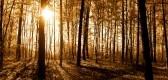 Panorama Of Autumn Deciduous Forest , Sunny Rays, Sun, Stock Photo.