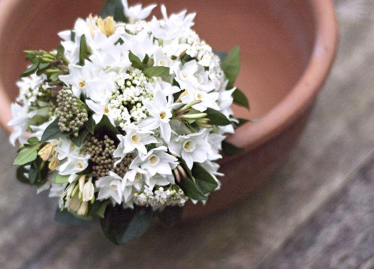 Best 20 Narcissus wedding bouquet ideas on Pinterest Jonquil
