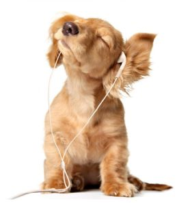 NCI Dog Insurance will be music to your ears, http://www.ncionline.co.uk/pet-insurance/dog-insurance/