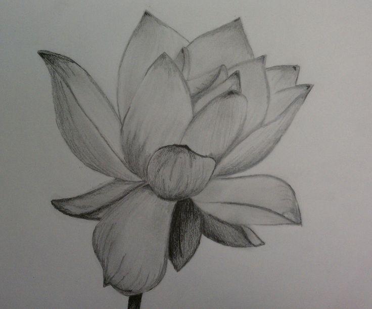 flower drawings in pencil | pencil of Lotus flower by ~1koolwhip on deviantART