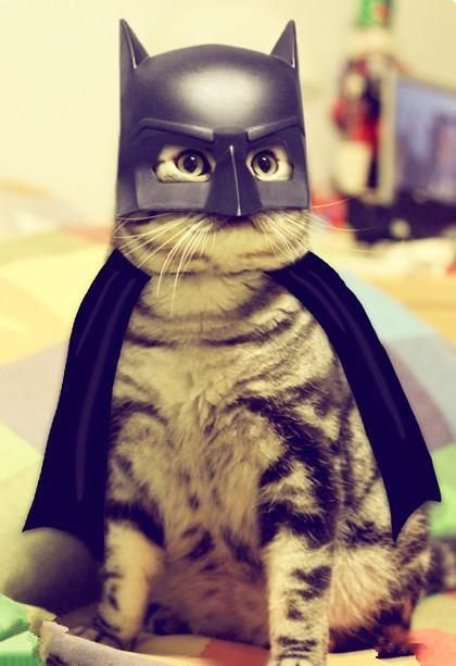 Batman....I'm supposed to be Catwomen..huh...humans,can't live with them and you can't eat them....mumblemumble....