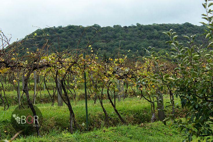 Rövidlépés: Pannonhalma és a Neszmélyi borvidék Baj itt: Komárom-Esztergom megye