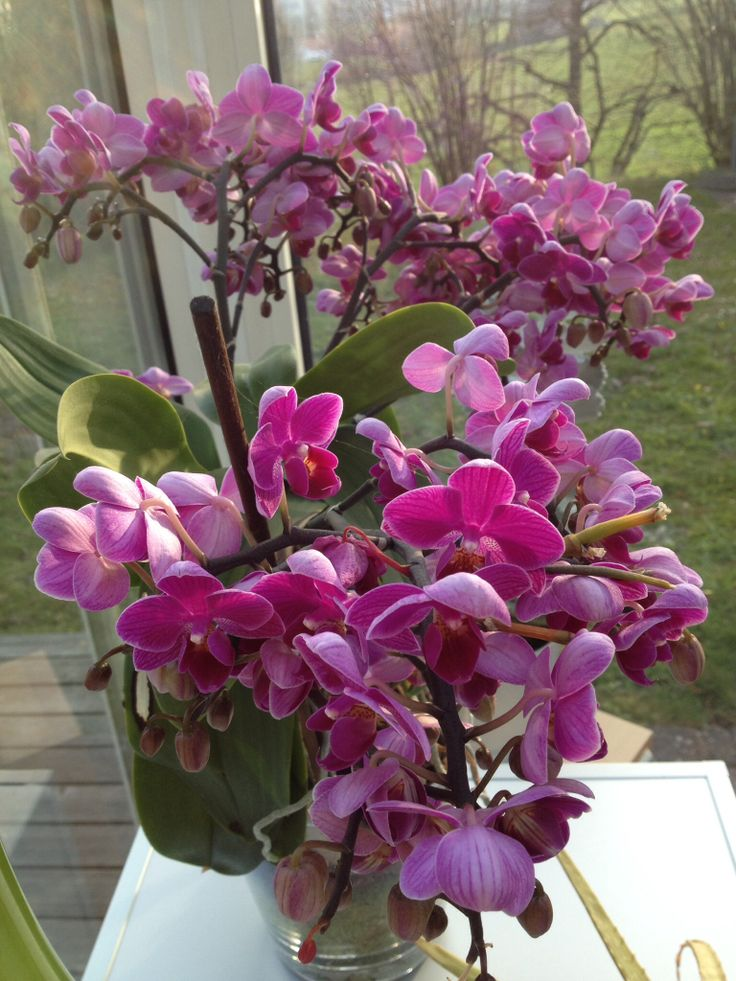 Rosmarieflower