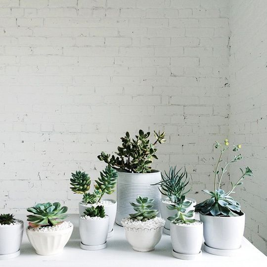 Ways To Decorate With Plants: 134 Best Houseplant Fever Images On Pinterest