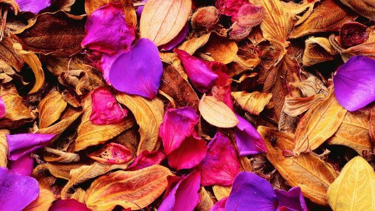Ma chi l'ha detto che l'#autunno è noioso? Con i nostri nuovi #BackGroundDT esplodono i colori! Date un nuovo look al vostro dispositivo. #ditieri #sfondi #gratuiti #sfondipertutti