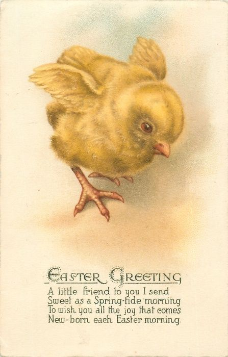 EASTER GREETING  chick faces front/right