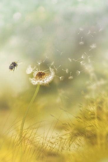 Summer breeze ~ photographer Lyn Evans